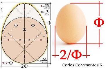 Número áureo en un huevo.