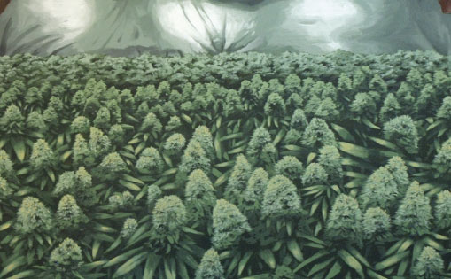 Mural interior para Grow shop,